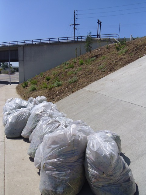 Trash bags at Whitsett slope