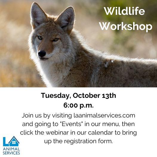 wildlife webinar